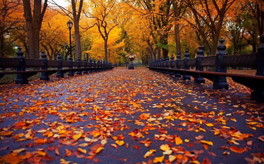 FALL (AUTUMN) SEASON HAS BEGUN: A VISIT TO CENTRAL PARK