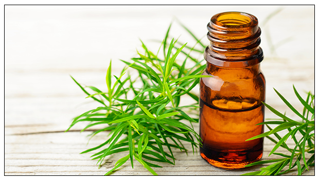 HEALTHY LIVING: THE BENEFITS OF TEA TREE OIL